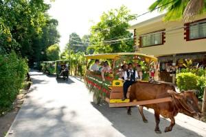 ox cart 2