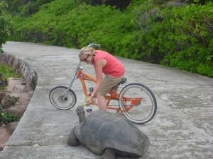 chopper tortoise